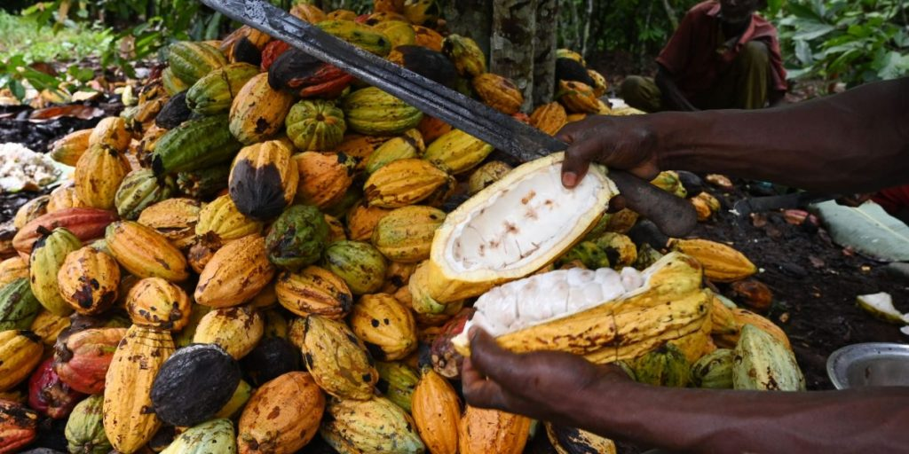 If we want to keep eating chocolate, we have to end deforestation