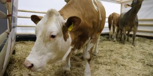 Looking to cut emissions, Europe eyes a 'sustainability' tax on meat
